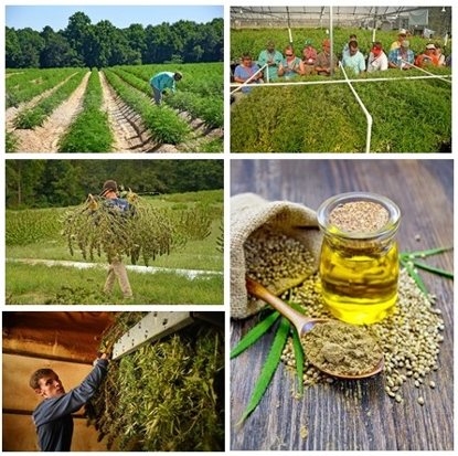 November 20 — The North Carolina Industrial Hemp Pilot Program